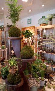 Akané-plantes